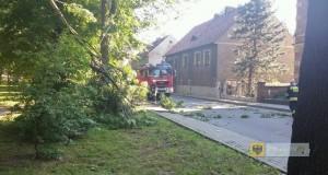 Konar uszkodził linię elektryczną na ul. Staszica